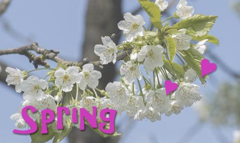 春のタイムセール